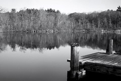 Turtle Pond View (jores59) Tags: 120 boston mediumformat 120film 6x9 hydepark bostonma turtlepond westroxbury stonybrookreservation centurygraphic graflexcenturygraphic wollensak101mmlens