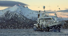 Purse seiner pumping herring from the net, outside Kvaløya (Snemann) Tags: winter sea mountains birds animals norway waves tromsø megapteranovaeangliae troms shipsandboats pentaxk5