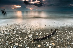 The Lost Limb (MOG'S) Tags: wood sunset sea seascape beach canon landscape wooden seaside log shell wave malaysia stick limb seashore klang dong pantai jeram kualaselangor remis leefilter pantaijeram 5dmark3