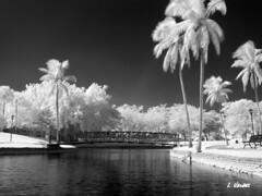 False color IR with 950nm filter. (LValdes) Tags: florida canong3 miamilakes irconverted lvaldes