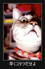 早くコタツだせよ #ペット #猫 #コタツ (Demochi.Net) Tags: life cute sexy japan fun japanese motivator culture 日本 ペット 猫 demotivator 金 家族 結婚 ゲイ 女 子供 おっぱい 愛犬 政治 社会 巨乳 文化 眼鏡 教育 demotivators 経済 女性 初恋 r18 女子 カップル 子猫 女装 お笑い motivators 会社 少子化 企業 ユーモア 恋 悪い 格差 風刺 一言 デモチ 大喜利