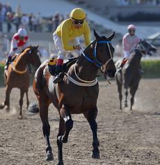 DSC_0031 (norberto pancetti) Tags: argentina caballos palermo turf carreras hipdromo