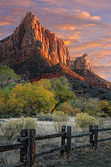 Zion National Park (Utah Images - Douglas Pulsipher) Tags: zionnationalpark utah desert ut southwest southwestern landscape canyon watchman formation geology geological formations sandstone cliff cliffs rocks rocky stone butte buttes mesa mesas towering vertical rugged isolated wilderness slickrock tourism tourist travel scenery scenic cottonwood trees cottonwoods autumn fall foliage leaves yellow changing seasons cottonwoodtrees parustrail hike hiking sunset sundown evening afternoon dramatic sky skies fence fenceposts utahdesert utahdeserts utahnationalparks southernutah southernutahdeserts