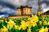 Thinking of Spring (Tony Shertila) Tags: flowers england sky house storm rain weather yellow architecture clouds europe day estate cloudy britain wakefield manor hdr daffodils westyorkshire yorkshiresculpturepark westbretton 100commentgroup mygearandme brettonhallcollege