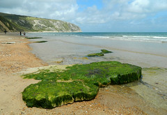 The Green Rock (*M.*) Tags: uk sea england seascape seaweed green beach rock strand landscape meer unitedkingdom dorset grn fels landschaft seagrass felsen seegras dorsetbeach greenrock englandbeach