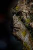tre quarti cubista (sharkoman) Tags: pareidolia tronco faccia cubismo licheni trequarti sharkoman