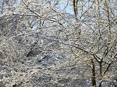 sneeuwwit (Astrid1949) Tags: winter sneeuw lucht wit blauwe emmen