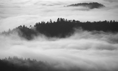 Fog Island of Humboldt County, California (Damon Tighe) Tags: california county ca trees bw usa white black mountains nature fog america forest landscape lost outdoors coast humboldt king north cost coastal backpacking norcal northern range homboldt