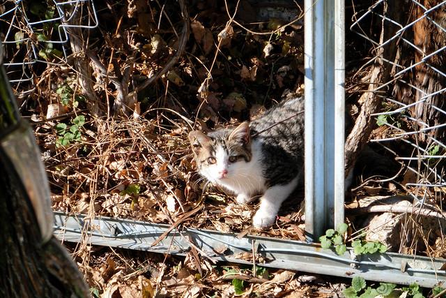 Today's Cat@2012-12-11