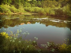 River Trent (Kinesis-888) Tags: nottingham river fishing chub trent barble flickrandroidapp:filter=tokyo