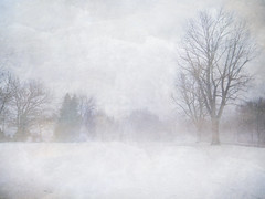 DSCN5589 - ON EXPLORE # 279 (pinktigger) Tags: trees winter mist snow fog landscape austria klagenfurt woerthersee naturesfinest