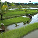 Philippines - Visayas Communal Irrigation and Participatory Project - Sept. 1998