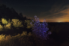 A purple tree (marcos schmitz) Tags: landscape psychedelic illumination surreal light art lightart painting long exposure bulb ledlenser canon colors purple night longexposure lightpainting extrieur
