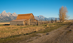 Mormon Barns, Grand Teton (MarkWarnes) Tags: cottonwoodtrees autumn grandteton barn mormonbarn antelopeflats wheat moranjunction grandtetonnationalpark farm mormonrow fall moultonbarn homestead