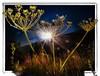RIBAZO -Entre luces de ocaso (Unos y Ceros) Tags: pirineos eltarter atardecer crepúsculo ocaso poniente anochecida lucesdeocaso ribazo contraluz textura luz unosyceros 2016 lightroom nikond700 zaragonés zaragoneses