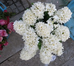 Thursday Colours - Hyacinth on a Sidewalk (Pushapoze) Tags: hyacinth italia italy sicilia palermo white flower fiore fleur bianco blanc
