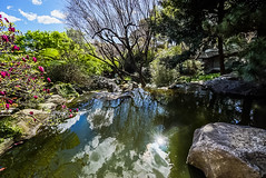 DSC01379 (Damir Govorcin Photography) Tags: chinese gardens darling harbour sydney zeiss 1635mm sony a7ii flowers