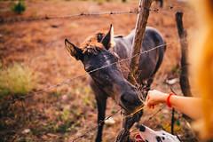 Hambriento (Leo Hidalgo (@yompyz)) Tags: canon eos 6d dslr reflex yompyz ileohidalgo fotografa photography vsco campo countryside descampado mijas fuengirola mlaga espaa spain animal caballo horse