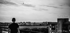 B&W with Firends (Matteo D'Amaro) Tags: instagram home photoshop photo nikon photograph photography lightroom black blackandwhite white bird city italy matteodam lucamantovani2 morning sky september sea nikond3300