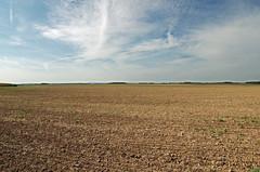 Bouville (Eure-et-Loir) (sybarite48) Tags: bouville eureetloir france beauce openfields plaine plain flachland ebene champ feld field  campo agro  akker land veld pole  plainedebeauce