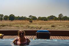 Zambia_LionCamp_289_elephant (atkiteach) Tags: zambia southluangwanationalpark southluangwa safari safaricamp camp nature naturereserve holiday rural africa lioncamp elephant elephants