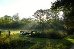 Weerterbos, ochtendgloren (ToJoLa) Tags: 2016 canon canoneos60d nature natuur natuurgebied naturetrail najaar weerterbos nederweert ochtend ochtendgloren sunrise landscape landschap zonnestralen zonsopgang