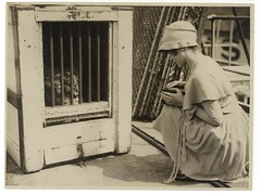 Box Brownie photographer & lion, ca. 1925-ca. 1945, Sam Hood (State Library of New South Wales collection) Tags: statelibraryofnewsouthwales