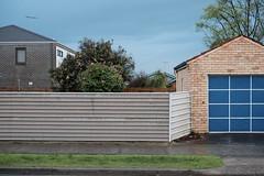 Blue Door (martyr_67) Tags: residential blue door garage oakleigheast oakleigh redevelopment sooc cordylineaustralis cameliasasanqua