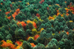 Paleta otoal (Mimadeo) Tags: autumn leaves color foliage forest horizontal landscape multicolor nature outdoors vibrant green red orange beauty