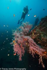 13Tracey Jones Photography160928 (davevanrooijen) Tags: bali divesites indonesia usatliberty underwater wreck