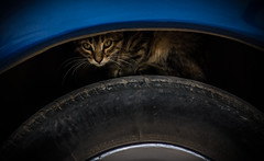 En el auto (torresglz) Tags: blue car azul cat canon mexico rebel san gato carro luis gatto llanta potosi rioverde t2i