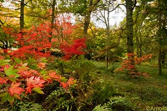 Winkfield Arboretum (justyourcofchi) Tags: autumn trees red england orange colour green yellow woodland foot countryside model woods flickr photographer path arboretum surrey national burnt guildford godalming turst winkfeild chiarnold justyourcupofchicom justyourcupofchi