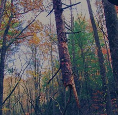 the woods in November (LauraSorrells) Tags: wood november blue autumn trees home forest jasper thecove thewildwood