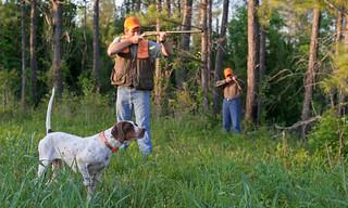 Alabama Quail Hunt - Davis Quail 25