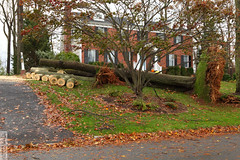 Uprooted (wmliu) Tags: new storm us sandy hurricane nj jersey tropical wmliu