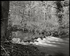 Derbyshire Wye - Ogden Island from the Right Hand Channel (Regular Rod) Tags: autumn light blackandwhite film nature water reflections river fishing woods stream shadows derbyshire peakdistrict 8x10 flyfishing trout willows bakewell alder alders fomapan shenhao semistand catchandrelease 510pyro ysplix rnbderbyshirewye derbyshirewye