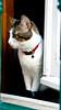 DSC01181 (Ideas Transparentes) Tags: cat gato ideas transparentes ideastransparentes