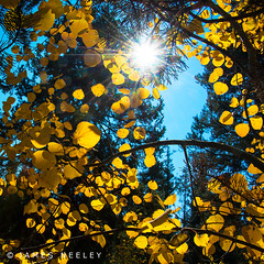 Day of Thanksgiving, Day of Light (James Neeley) Tags: thanksgiving autumn stilllife fall nature yellowstonenationalpark jamesneeley