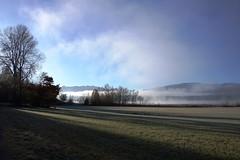 Die Nebel lichten sich (Renate Dodell) Tags: morning november shadow mist tree nature fog bayern bavaria nebel natur morgen schatten baum 2012 staffelsee dorenawm nex7 renatedodell
