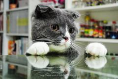 DSC_6524 (archiwu945) Tags: cat 寵物 貓 nikon1v1