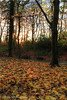 (Brian Sayle) Tags: park autumn tree leaves landscape outdoors leaf angle wide wideangle 7d 1022 wirral canon1022 superwide efs1022mmf3545usm arrowpark eos7d canoneos7d canon7d