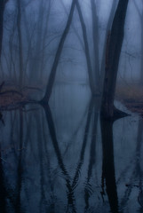 Foggy morning reflections (Evn1ngStar) Tags: fog waterreflections treesinfog