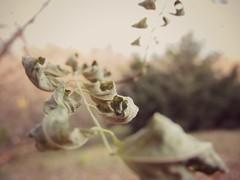 foglie (Yuliya Pelyno) Tags: autumn beautiful foglie giallo foglia autunno secco secche