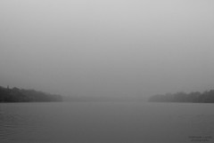 Danube (vizcsap) Tags: bridge autumn trees blackandwhite bw white black fall water birds fog forest river nikon hungary 85mm nikkor duna magyar danube magyarország 18d fekete fehér 85mm18d d80 nikond80