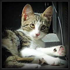 Nermal (Cajaflez) Tags: pet klein kitten chat little panasonic katze nermal gatto katje thegalaxy katertje saariysqualitypictures mygearandme mygearandmepremium mygearandmebronze mygearandmesilver mygearandmegold mygearandmeplatinum blinkagain dmcfz150 rememberthatmomentlevel1 rememberthatmomentlevel2 rememberthatmomentlevel3 huisier