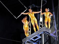 Circus Circus Acrobats