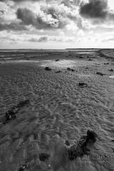 low tide (ale_brando) Tags: shore lowtide beach sand frederikshavn denmark dk clouds cloudy dull dullday d700 seaweed horizon landscape travel nikonfx fx