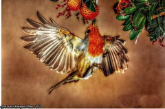 aves (soult1) Tags: arte aves texturas composicion flickrsfinestimages1 me2youphotographylevel2 me2youphotographylevel3 me2youphotographylevel1 freedomtosoarlevel1birdphotosonly me2youphotographylevel4 freedomtosoarlevel1birdsonly