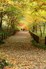 beautiful path. (cate) Tags: path walk ramble autumntrees fallenleaves autumnscene