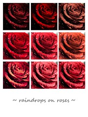 ~ raindrops on roses ~ (Janey Kay) Tags: flowers roses collage fleurs raindropsonroses janeykay panasoniclumixlx5